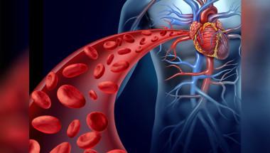 Д-р Райна Сивова: Ако кръвоносните съдове са здрави, имаме добър имунитет