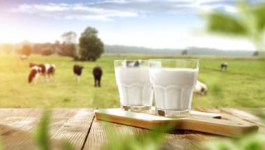 Млякото помага на тялото да изгаря мазнините