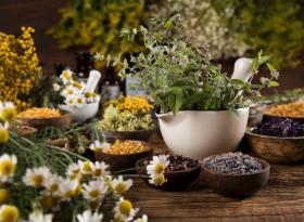 Бояна Иванова: Билките възстановяват баланса на метаболитните процеси и хормоните