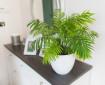 Във всеки дом трябва да има поне едно от тези растения
