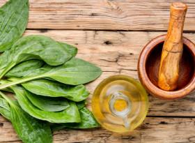 Живовляк със захар или мед – най-ценното лекарство