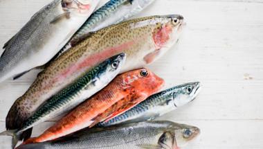 Черен списък: 8 вида риби, които трябва да се избягват СНИМКИ