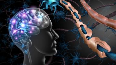 Как са свързани множествената склероза и имунната система?