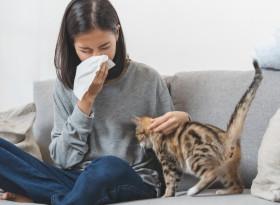 Митове за алергиите