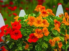 Цветята – лек при импотентност
