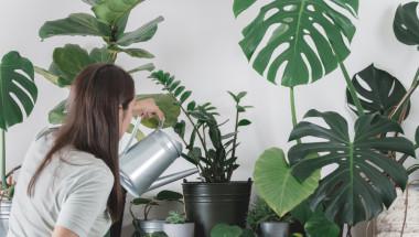 Кои растения пречистват въздуха у дома?