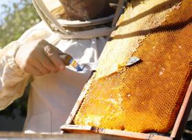 Д-р Пламен Енчев: Най-добрият мед за лечение е от пчелна пита