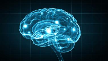 7 добавки, стимулиращи мозъка