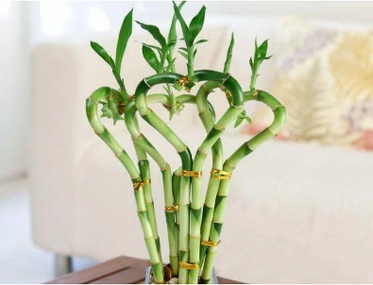 Тези 4 растения у дома ще ви направят червиви от париНовиниИнформация